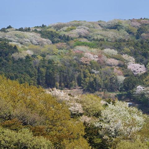 20110417_rokkokukenzan1