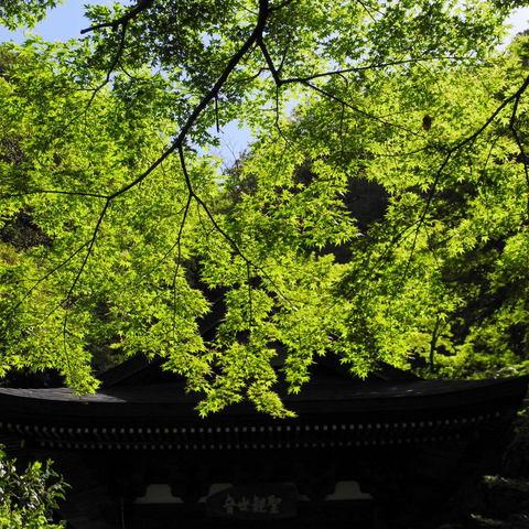 20110428_engakuji1