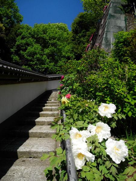 20110428_engakuji10