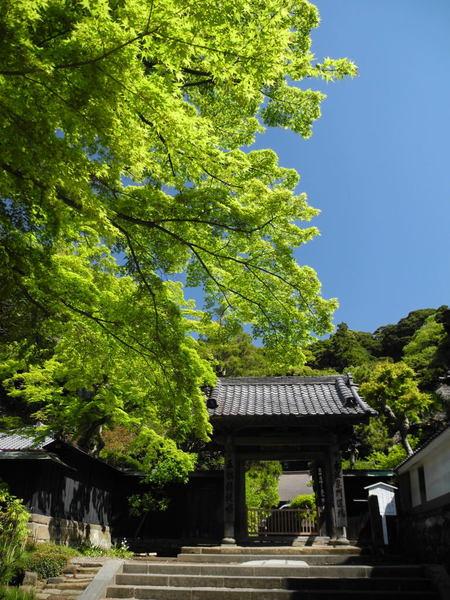 20110428_engakuji4