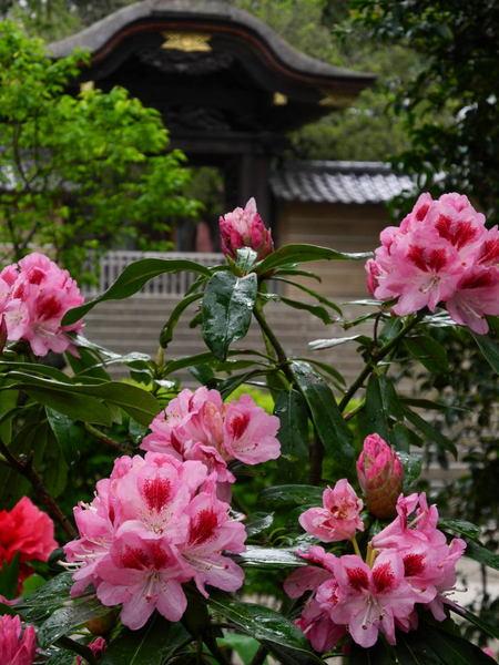 20110501_engakuji6