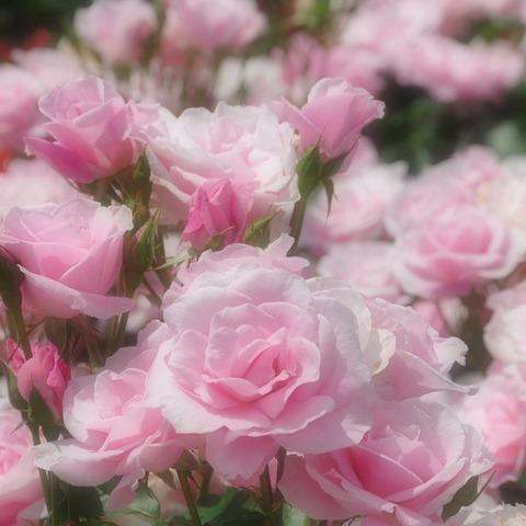 20110522_flowercenter1