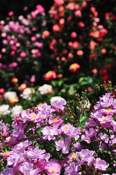 20110522_flowercenter2