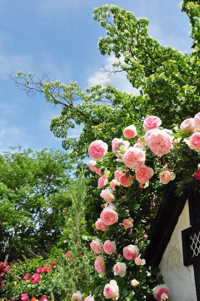 20110522_flowercenter3