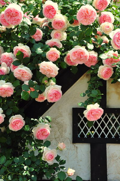 20110522_flowercenter4