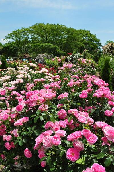20110522_flowercenter5