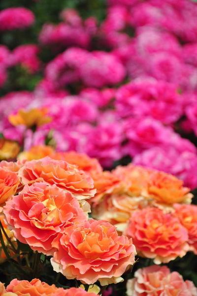 20110522_flowercenter6