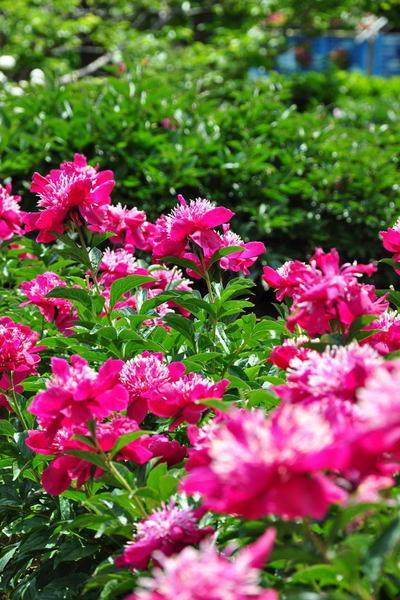 20110522_flowercenter7