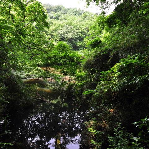 20110605_kurakubo1