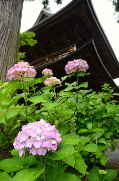 20110617_engakuji2