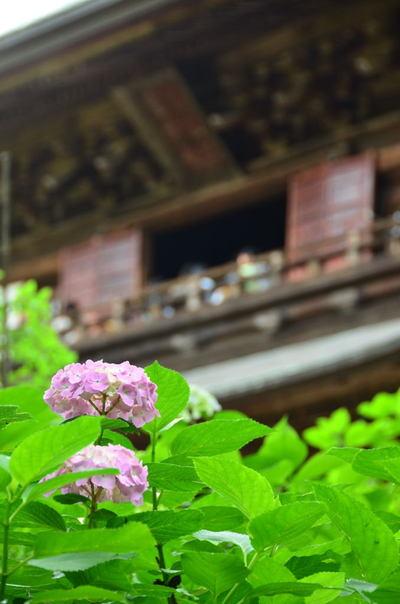 20110618_engakuji5