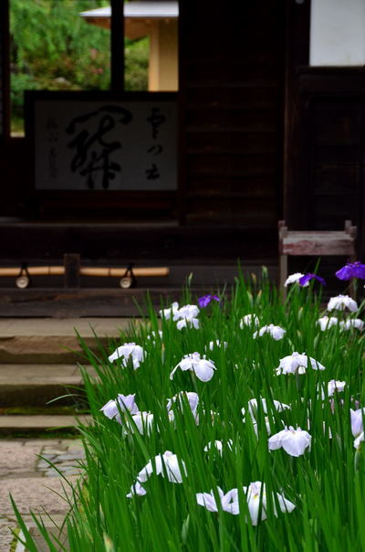 20110619_kaizoji2