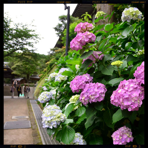 20110617_engakuji1