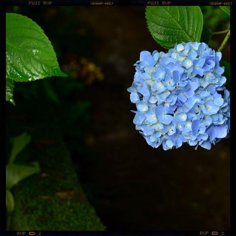 20110617_meigetsuin1