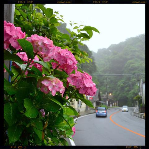 20110619_tokiwa