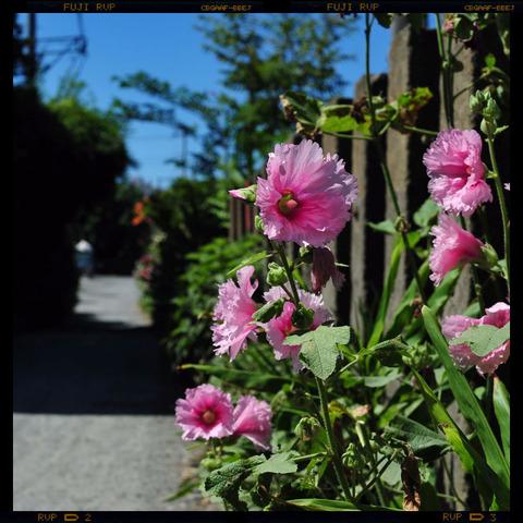 20110712_yukinoshita2