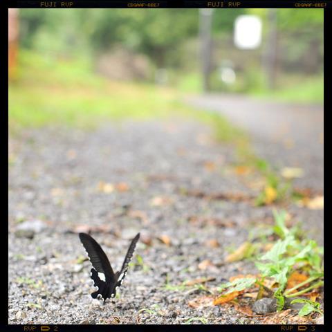 20110719_butterfly