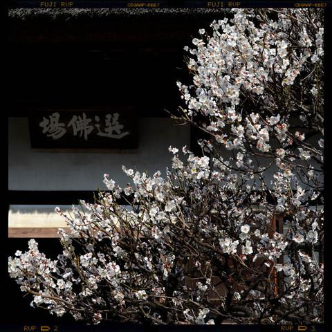 20130316_engakuji1
