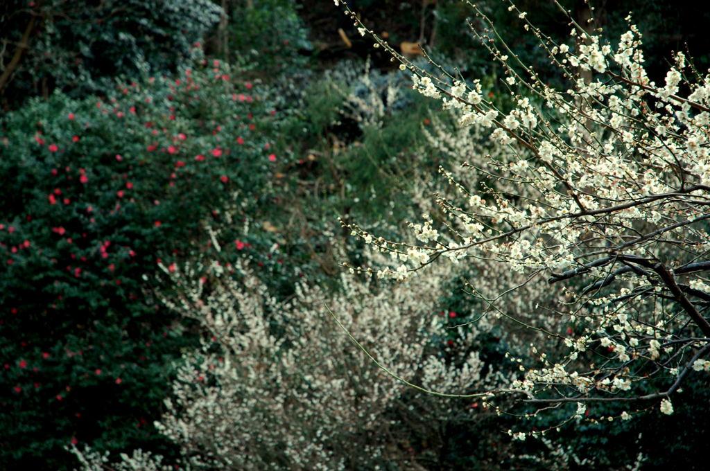 20100228_teisoji2