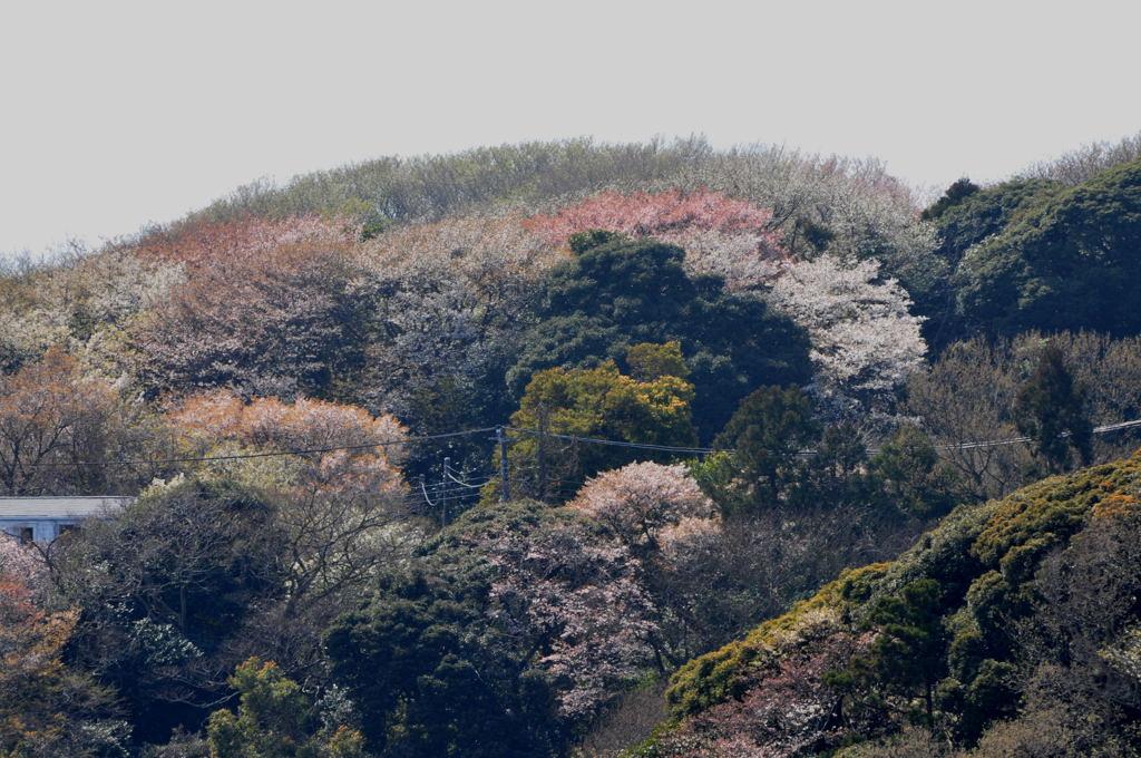 20100403_shichiri6