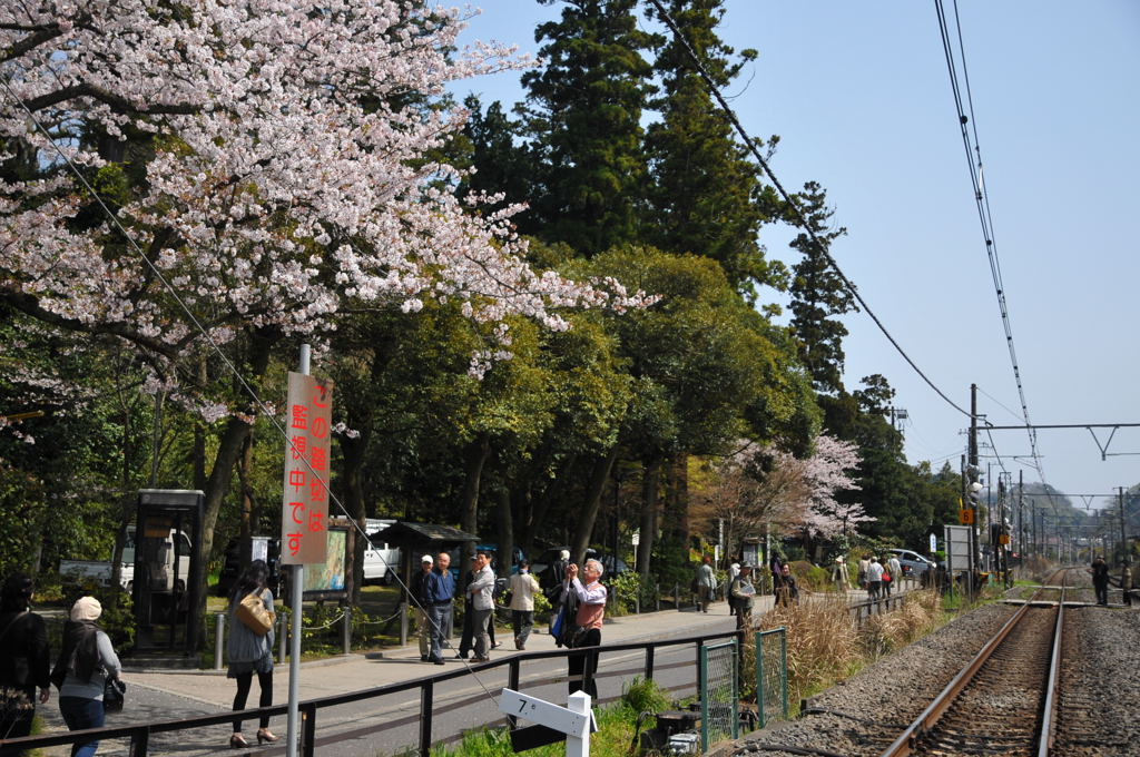 20100406_engakuji2
