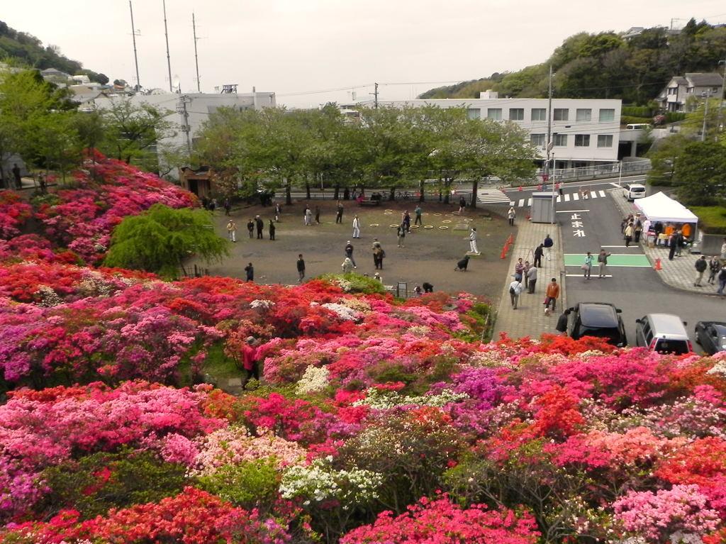 20100424_hananoki6