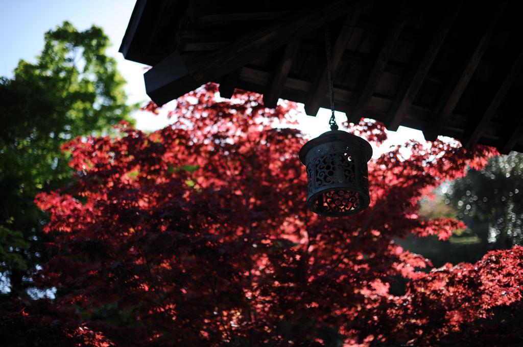 20100429_kaizoji1