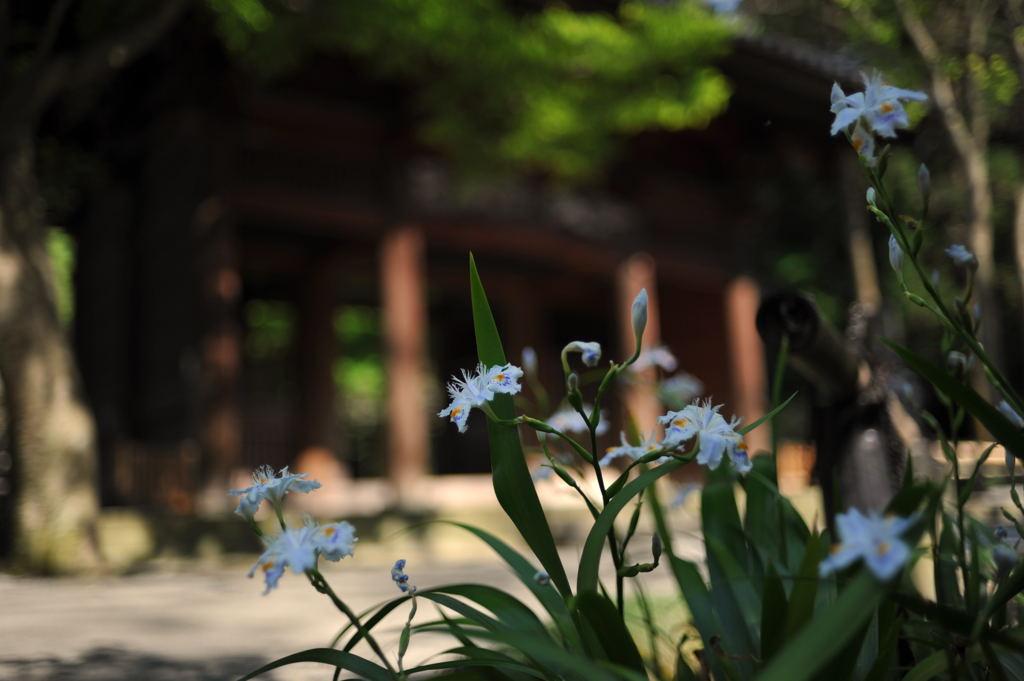 20100501_myohonji1