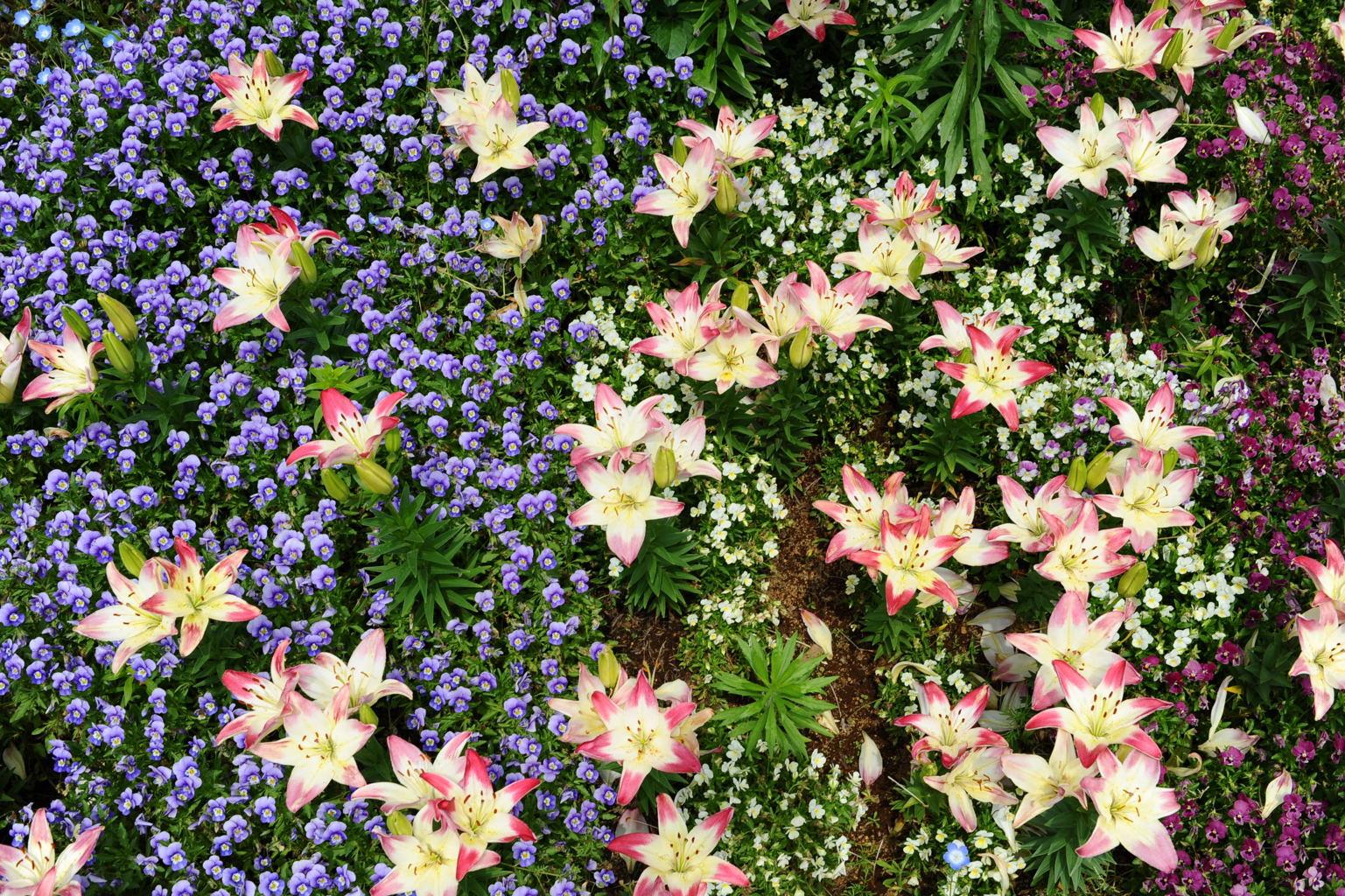 20100522_flowercenter8