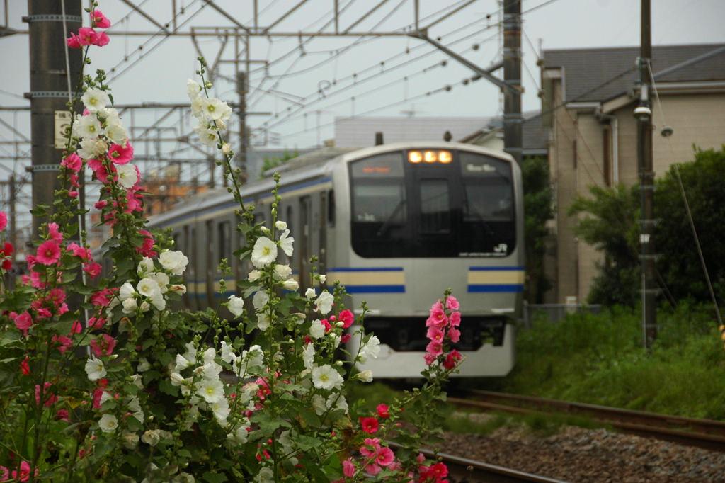 20100620_ajisai7