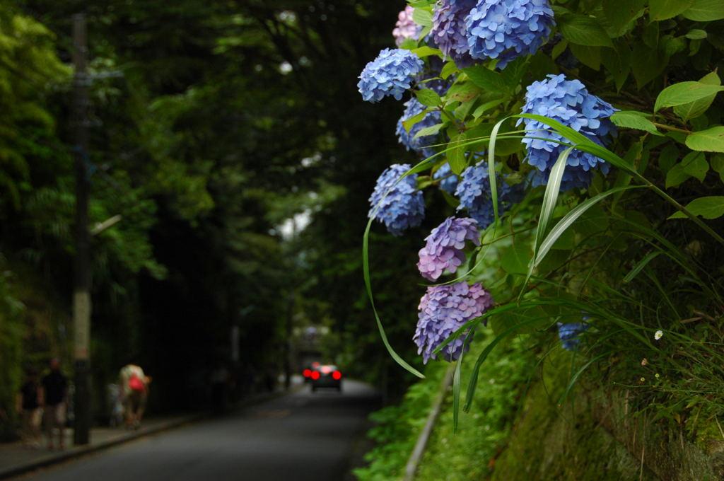 20100620_ajisai13
