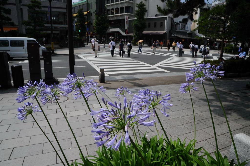 20100706_daikoji2