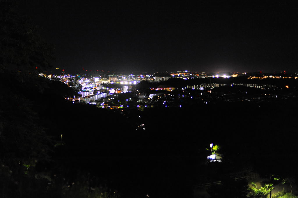 20100828_nightzoo6