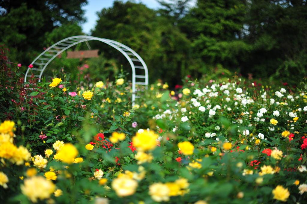 20101016_flowercenter3