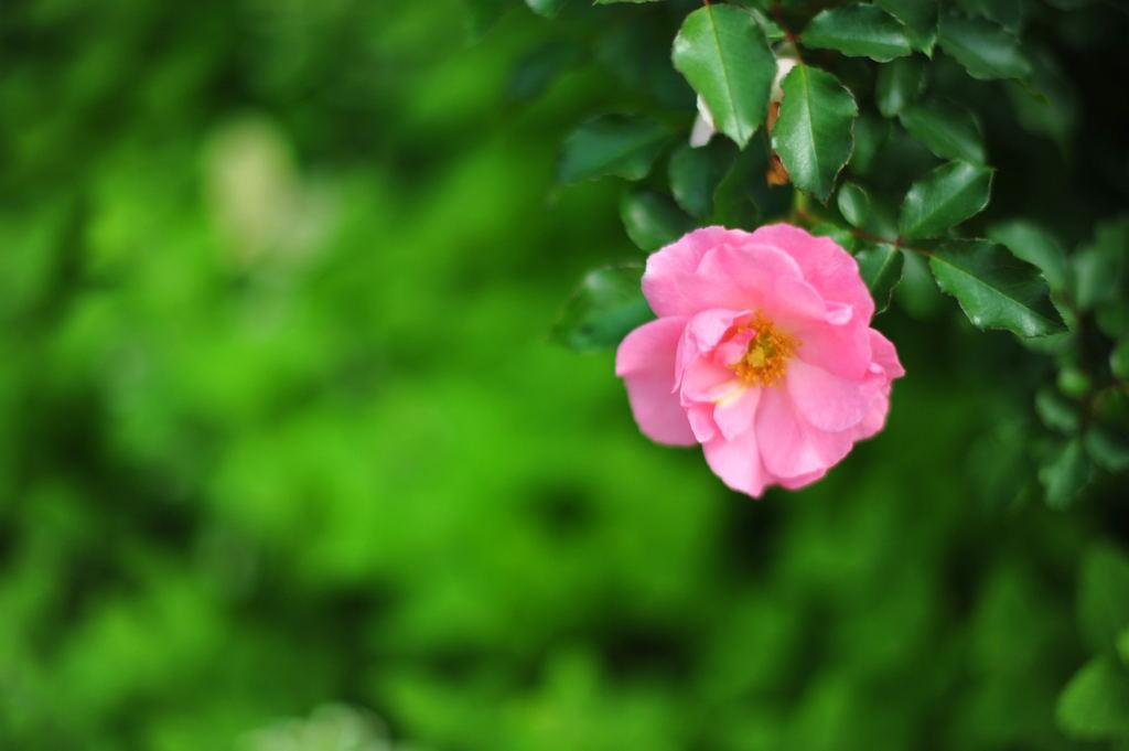 20101016_flowercenter5