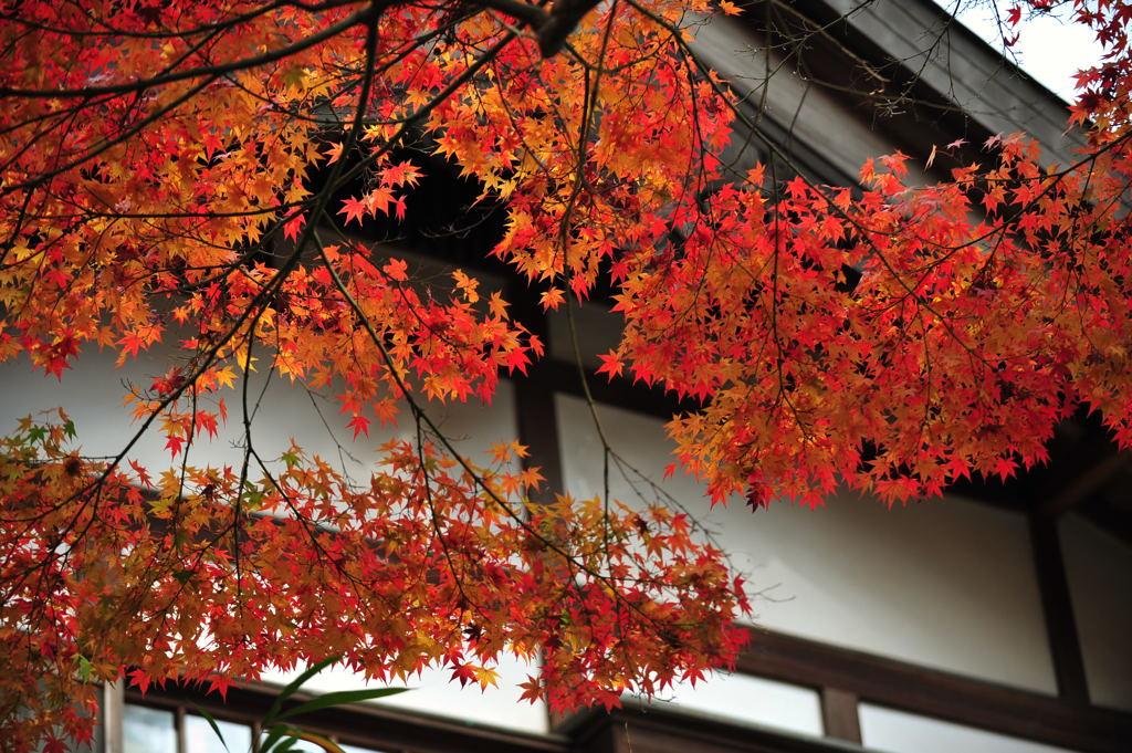 20101126_kenchoji3