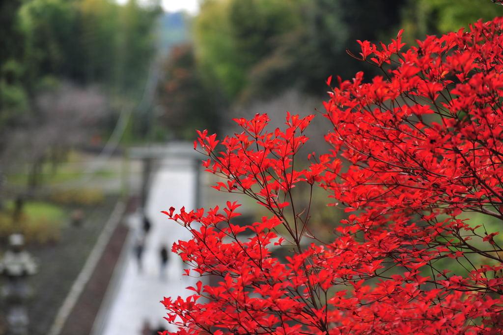 20101126_kenchoji4