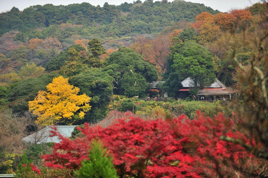 20101126_tokeiji9