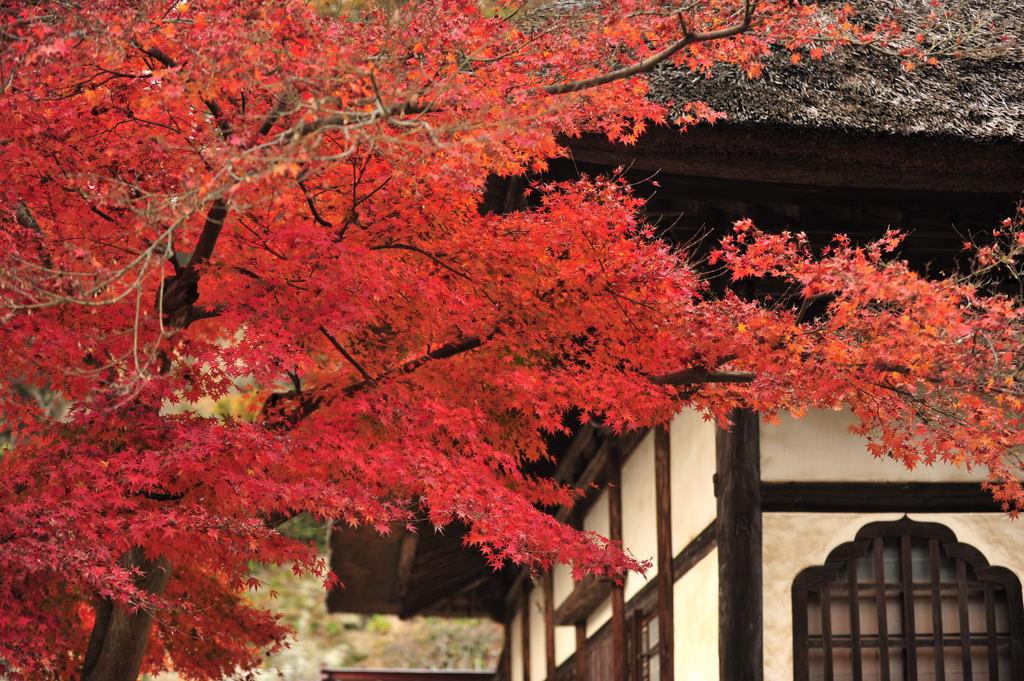 20101126_engakuji3