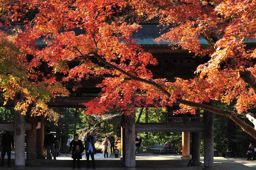 20101128_engakuji3