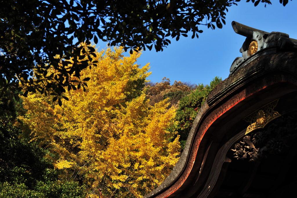 20101128_engakuji5