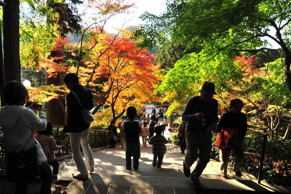 20101128_engakuji6