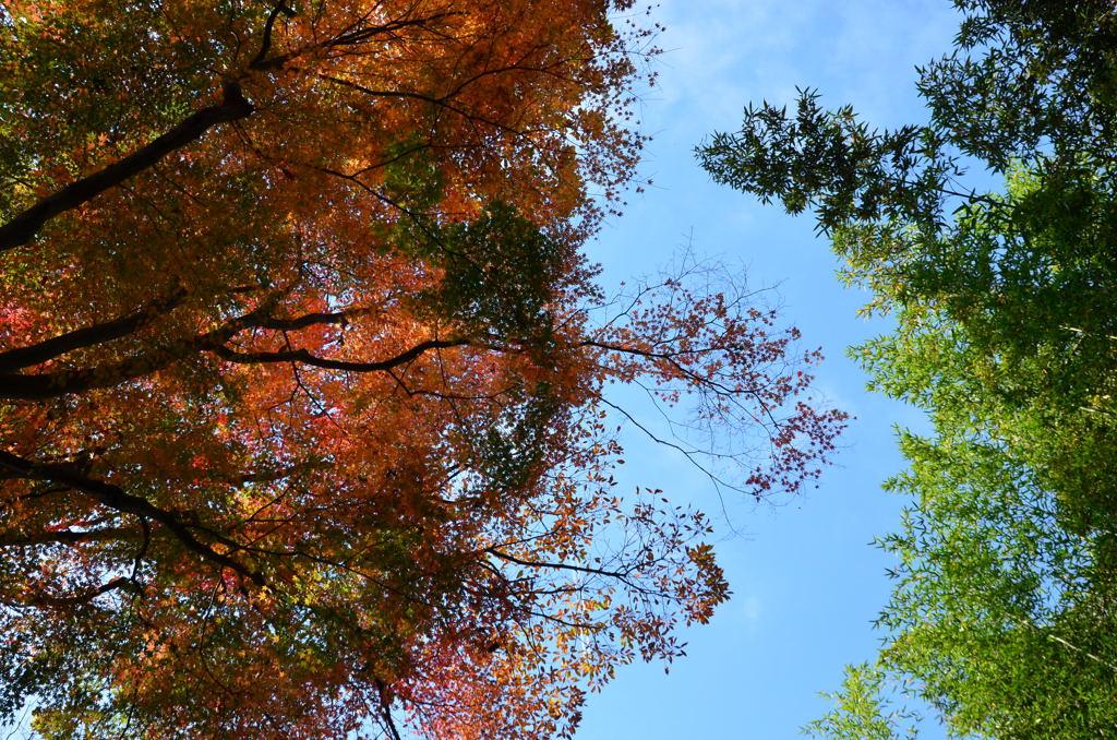 20101205_asahina7