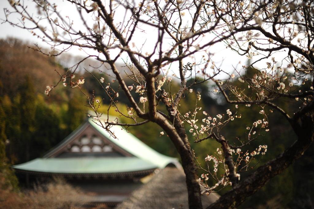 20110103_engakuji4