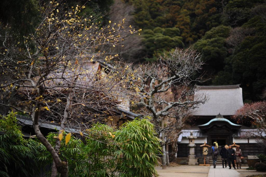 20110103_engakuji9
