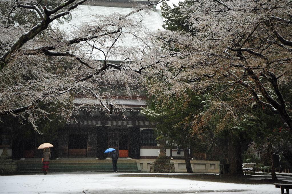20110211_engakuji3