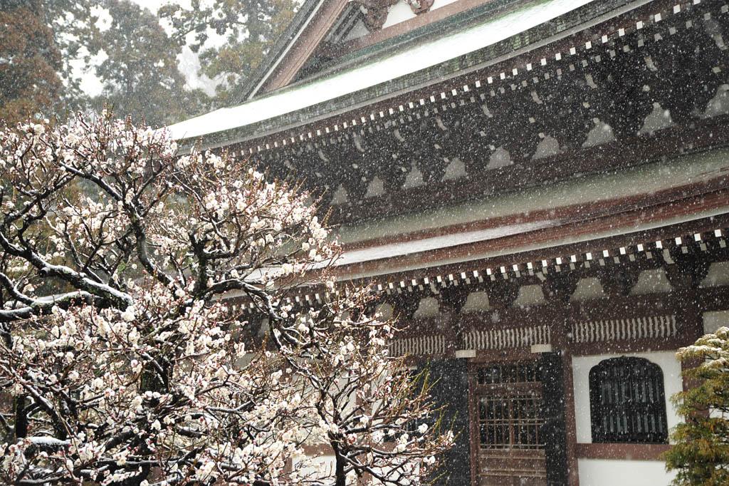 20110211_engakuji7