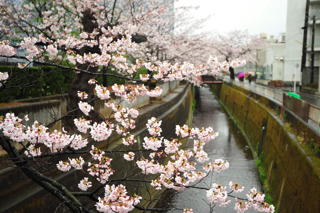 20110409_sunaoshi2