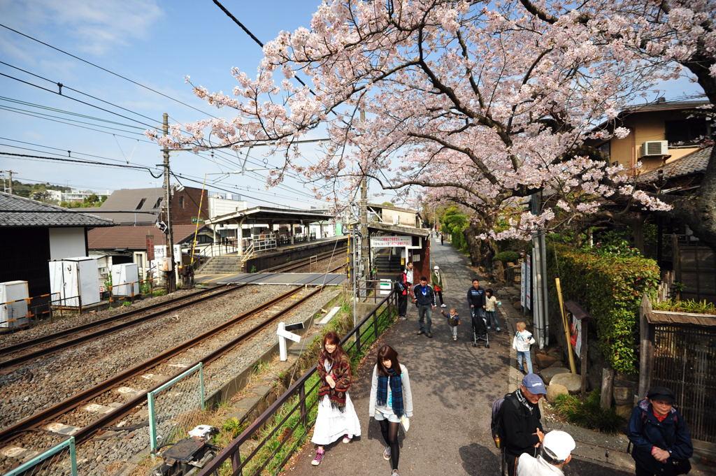 20110410_engakuji3