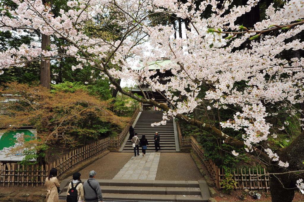 20110410_engakuji4